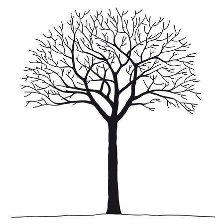 dead trees: �rbol desnuda