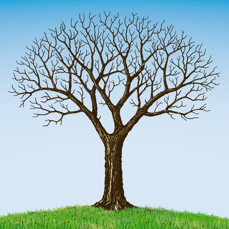 Bare tree Stock Vector - 10526521