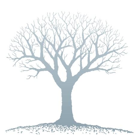lone tree: Bare tree