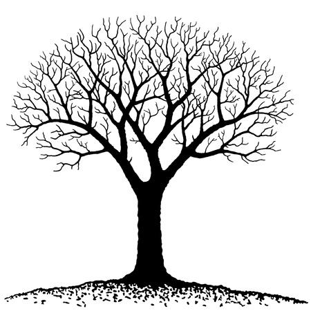 albero secco: Albero nudo Vettoriali