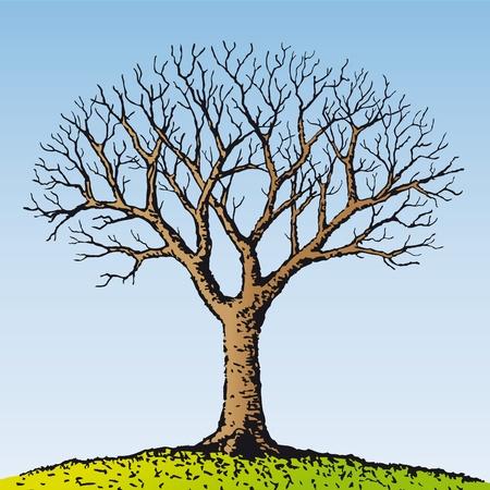 arbre mort: Arbre nu
