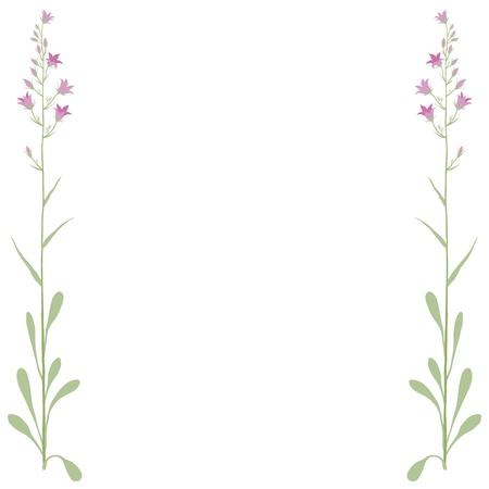 campanula: Flower campanula Stock Photo