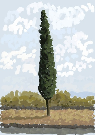 juniper tree: Cypress tree