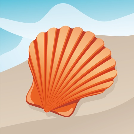 shoreline: shell