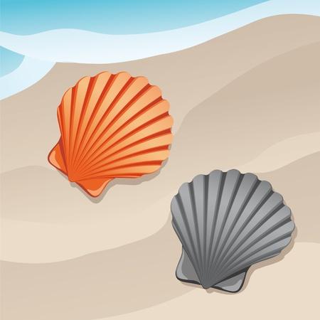 shell: shell