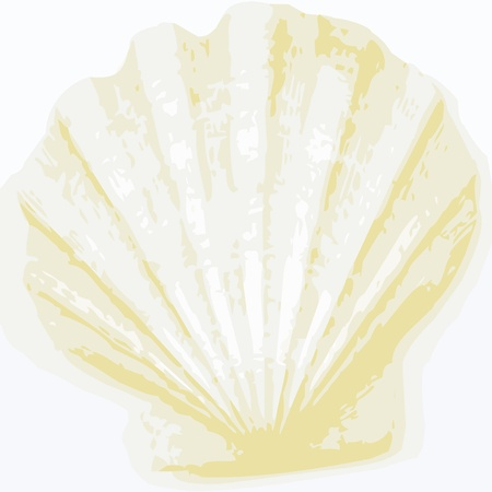 scallops: shell background