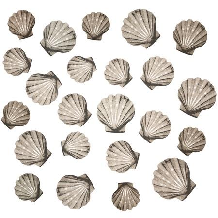 mejillones: Fondo de conchas