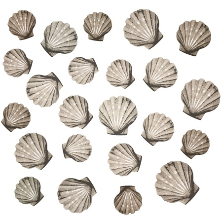 shells background Stock Vector - 10590563