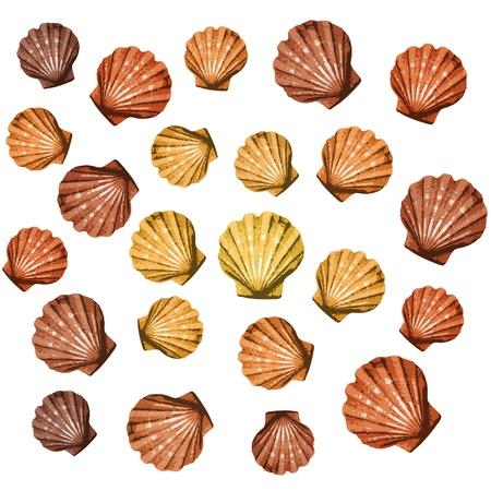 mejillones: conchas de fondo