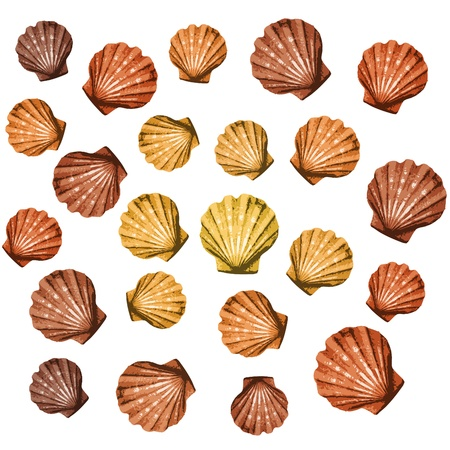 scallop: shells background Illustration