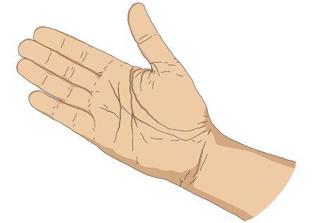 palm hand: hand