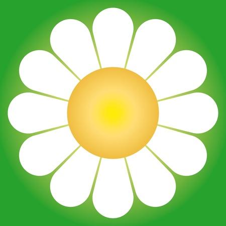 daisy field: flower