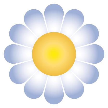marguerite: flower