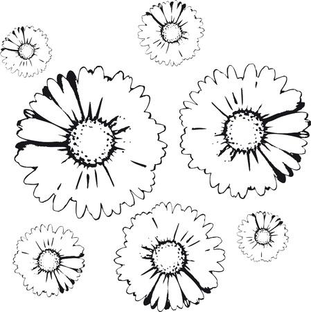 marguerite: flowers background Illustration