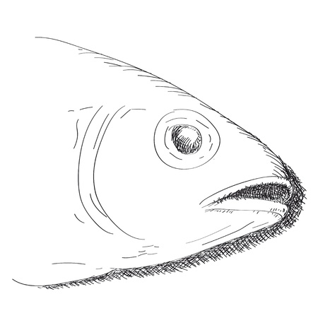 mouth open: fish
