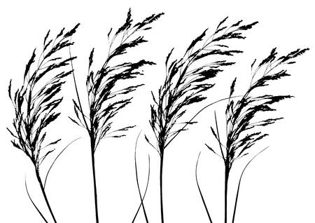 plants Stock Vector - 10710475