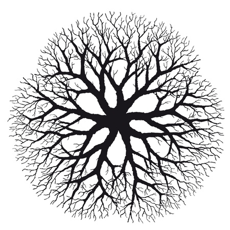 Branching Stock Vector - 10726180