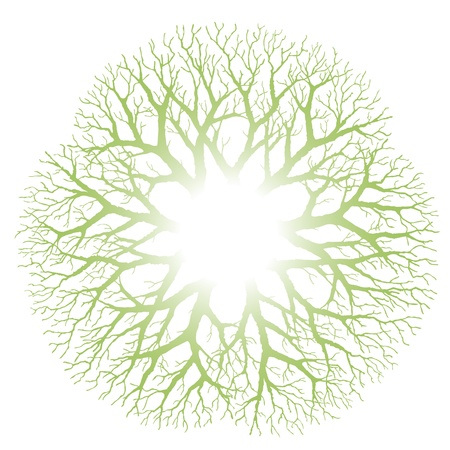 of irradiated: Branching