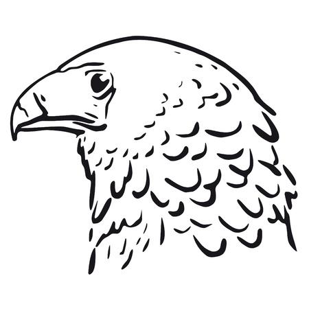 plumage: Eagle head Illustration