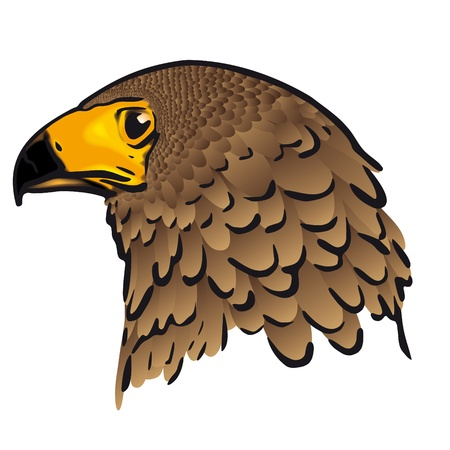 Eagle head Stock Vector - 10726271