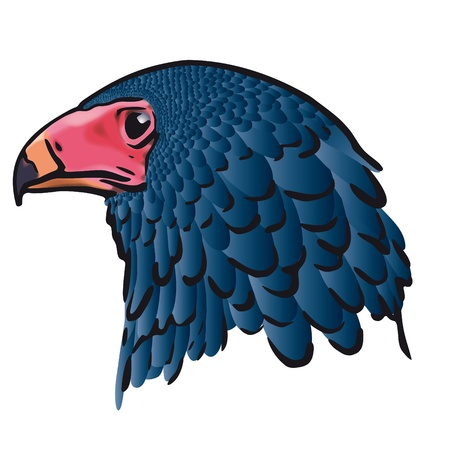 Eagle head Stock Vector - 10726273