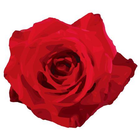 rose Stock Vector - 10736378