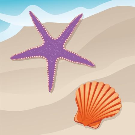 starfish on beach: starfish and shell