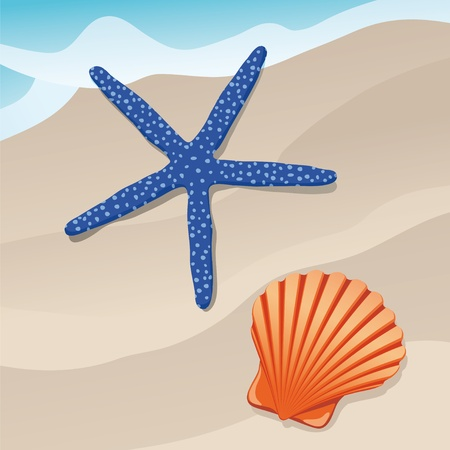 starfish and shell Vector