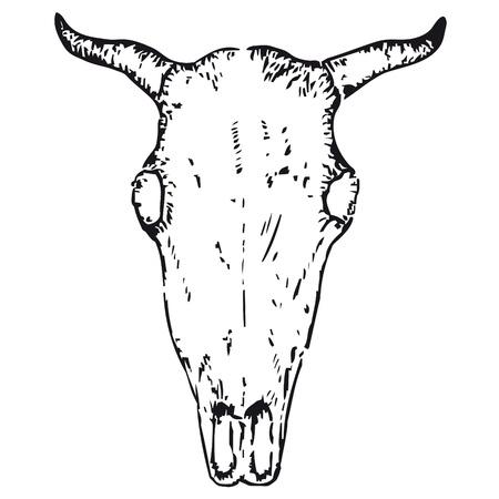 buey: cráneo de buey Vectores