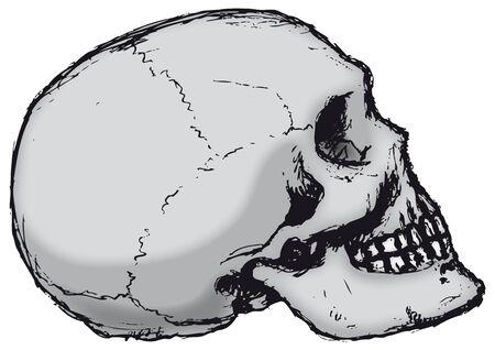 apprehension: Skull Profile