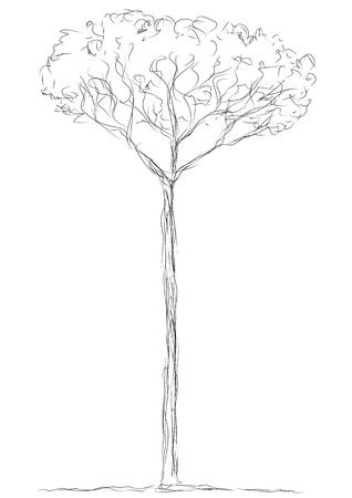 tree Stock Vector - 11967400