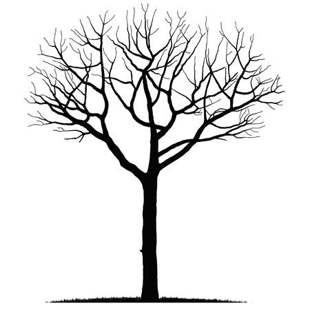 silhouette arbre hiver: arbre