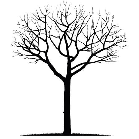 tree Stock Vector - 12479935