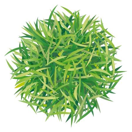 greening nature natural: tussock grass Illustration