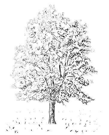 tree sketch: tree