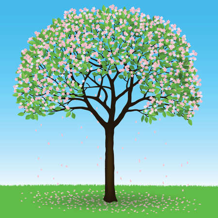 Cherry tree with leaves and fruits, isolated vector illustration.