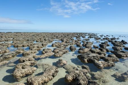 Los estromatolitos en el Área de la Bahía Shark, Australia occidental, los microorganismos más probables tierras primera vivienda y el productor de oxígeno, alrededor de 3 mil millones de años. Foto de archivo - 15443880