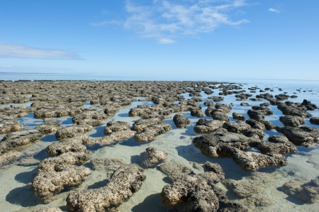 Stromatolites in  Area of Shark Bay, Western Australia, most likely earths first living microorganisms and producer of oxygen, around 3 billion years ago. Stock Photo