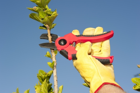 Hands with gloves of gardener doing maintenance work photo