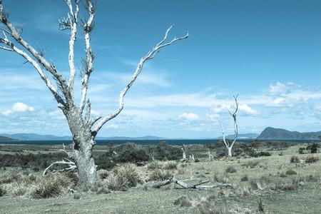 arboles secos: imagen de los árboles muertos solitarios tono frío filtrado en campo llano remota cerca de la costa del océano y las montañas en el horizonte, el cielo azul como espacio de copia. Foto de archivo