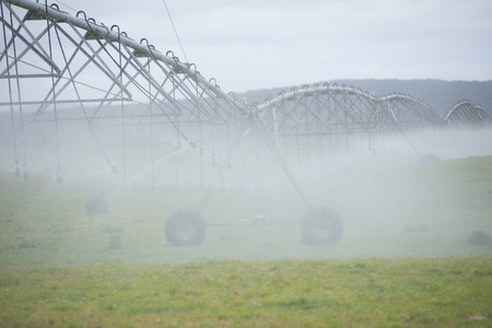 agricultural farm land: Misty Irrigation by pivot sprinkler and spraying system on green grass field or meadow on rural agricultural farm land, copy space.