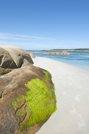 Green sea weed on rock at white beach at Bay of Fire, Tasmania, Australia, with turquoise ocean water photo