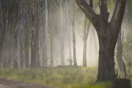 woodland  horror: Shining light through eerie mystic spooky fog shimmering in the woods of dark forest. Stock Photo