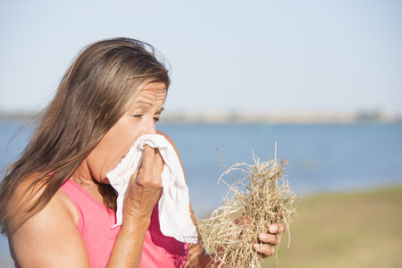 hayfever: Portrait attractive mature woman suffering from seasonal hayfever allergy, holding straw in hand and sneezing into handkerchief tissue