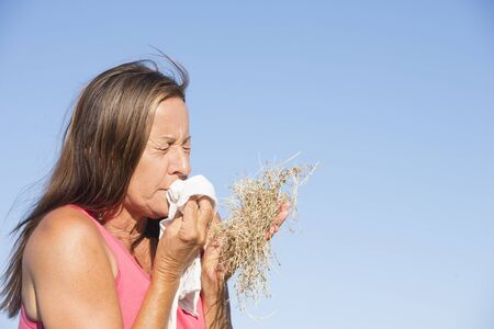 hayfever: Portrait stressed mature woman suffering from seasonal hayfever allergy, holding bunch of dry straw grass, sneezing into handkerchief tissue Stock Photo