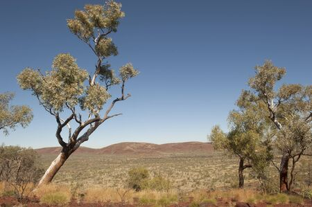 australia landscape: Outback scenery with trees, prairie and hills of the Pilbara landscape in north western Australia, with blue sky as background and copy space.