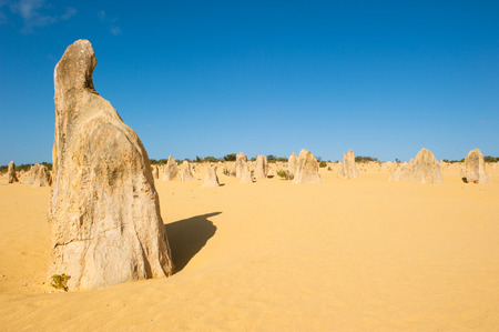 tourist attraction: Tourist attraction Desert landscape of Pinnacles in Nambung National Park, in remote outback of Western Australia, north of Perth, blue sky, horizon, copy space.