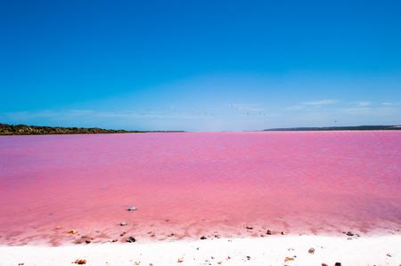 Escénico vista panorámica de colorido rosado de Salt Lake en Australia Occidental, causada por las algas, con la bandada de pájaros que vuelan sobre el agua, el cielo azul, horizonte, espacio de la copia. Foto de archivo - 49124064