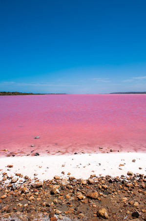 water  panoramic: Scenic colorful Pink Salt Lake at Port Gregory in Western Australia, caused by algae in water, summer sunny blue sky, panoramic view, horizon.