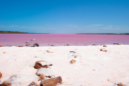 western australia: Panoramic view of scenic colorful Pink Salt Lake at Port Gregory in Western Australia, caused by algae in water, summer sunny blue sky, horizon, copy space.